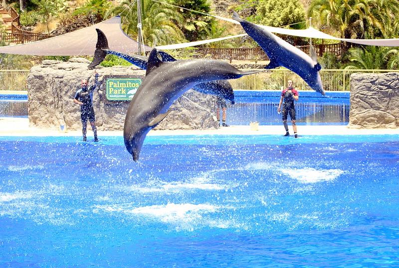 delffiinejää