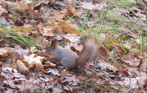 Iisalmen orava by Anna Amnell