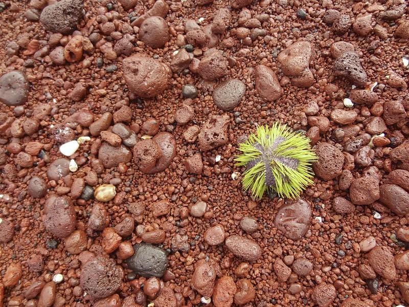 galapagos rabida cerro dragon 13