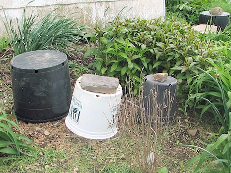 Cover plants with containers to trap the earth's heat and protect plants from cold damage.