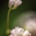 Baby's Breath by GFletch -- persistently behind :)