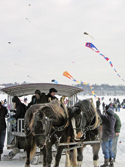 horse team at 2014 Lake Harriet Winter Kite Festival
