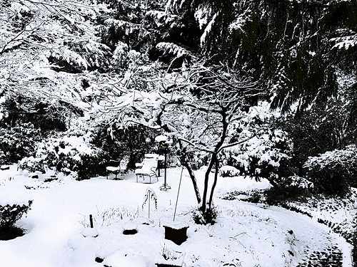 Winter's High Contrast Landscape