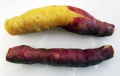 Gele zoete aardappel met paarse schil