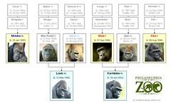 Gorilla Family - Philadelphia (2014)