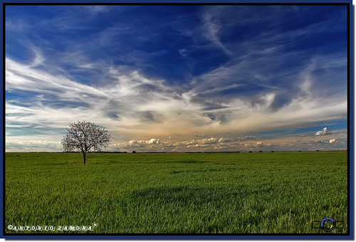blue trees sky cloud paisajes naturaleza white color tree verde green primavera blanco weather azul clouds canon landscape arbol landscapes spring arboles natura paisaje colores cielo nubes campo llanos nube horizonte lamancha llano hierba castillalamancha llanura cauntry manchuela casasimarro antoniozamora manchuelaconquense