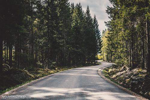 street trees summer green nature forest spring woods sweden evergreen pines sverige asphalt sommar saverio katrineholm skogen södermanland autellitano trän
