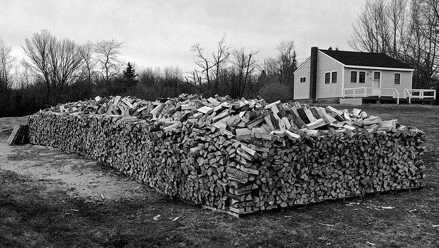 Teddy's woodpile again