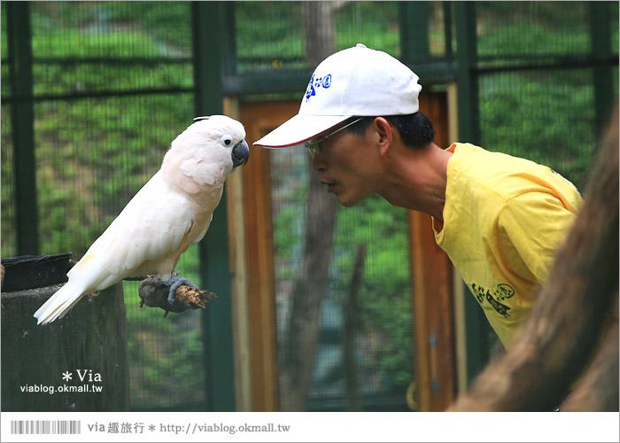 【新竹景點推薦】森林鳥花園~親子旅遊的好去處!在森林裡鳥兒與孩子們的樂園37
