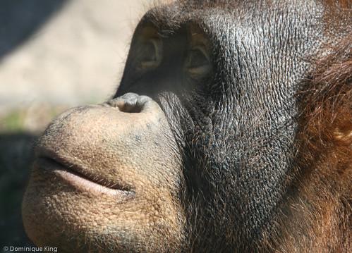 20140408-Toledo_Zoo-0156.jpg