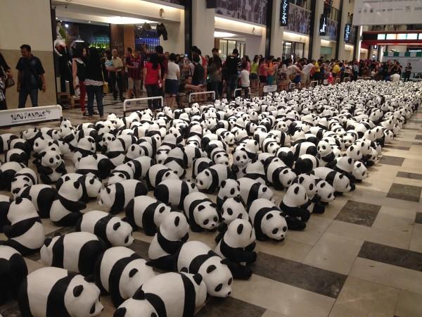 1600-pandas-3