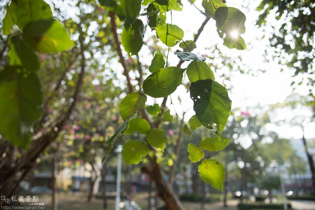 台南私藏景點-水萍塭公園 (25)