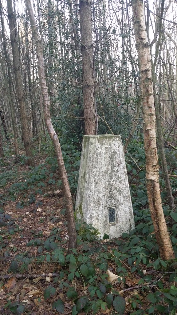A lonely trig in the forest #sh