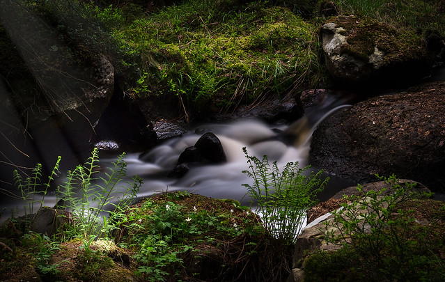 Babbling Brook in an enchanted forest