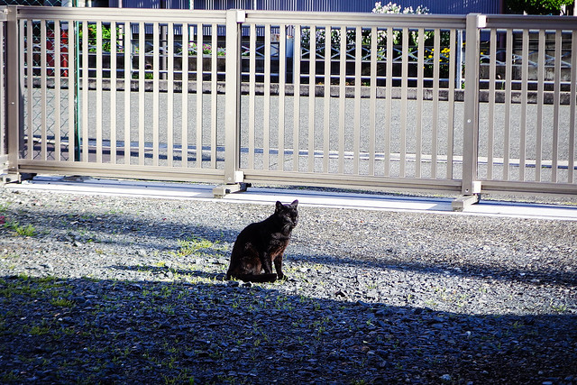 Today's Cat@2016-05-14