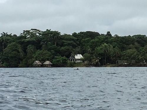 Bocas del Toro: un dauphin !