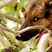 Shepherd dog resting by Beatriz-c