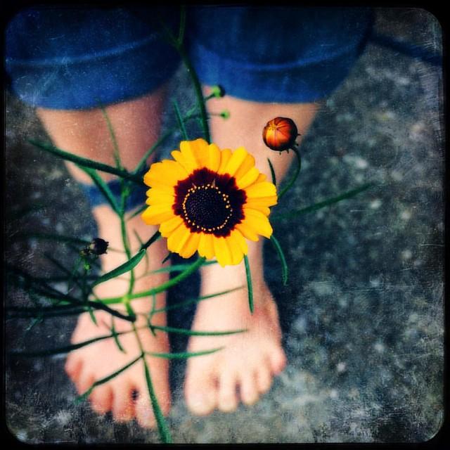 Coreopsis #coreopsis #flowers #patiogarden #garden