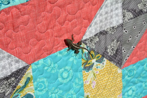 Divide and Conquer - Lizard enjoying the quilt