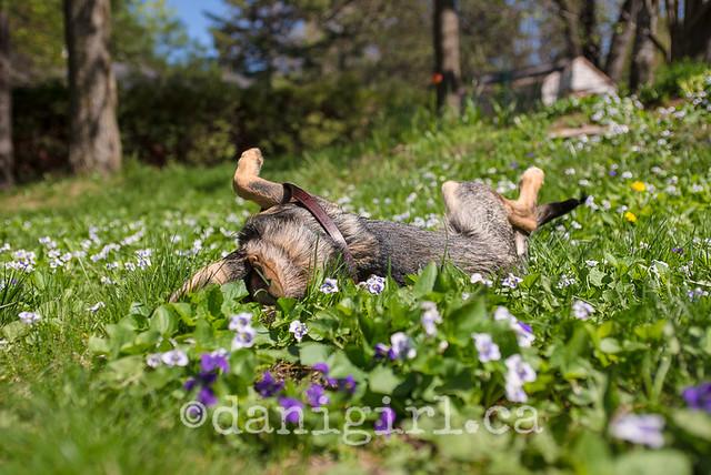 Bella in the flowers-4