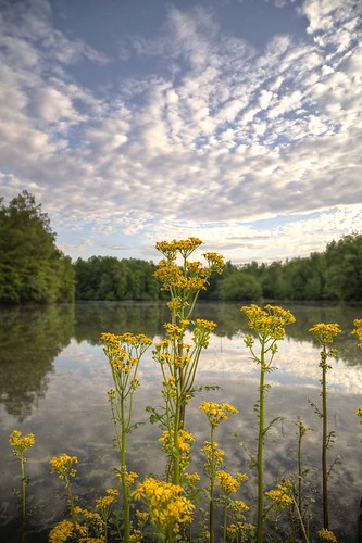 sky lake flower water yellow vertical spring trail missouri ethereal hdr 2013 scottcounty