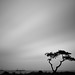 Lonely Tree_HYUN_130509_072 by from0