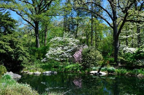 The New York Botanical Garden Forest