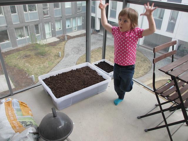 Plocksallad och kryddväxter i plastkaren