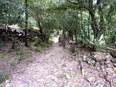 Descente vers le ruisseau d'Alzellu : le chemin depuis Olmi