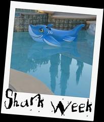 Random Shark Sightings