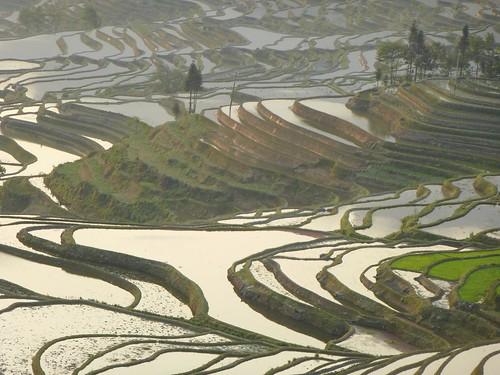 Yunnan13-Yuanyang 1-Duoyishu (74)