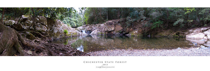 Chichester State Forest