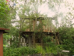 woodland, outdoor structure, garden, tree, shack, plant, tree house, rural area,