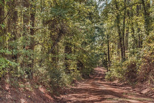 texas state slt rusk forestsony a77v idfairchild