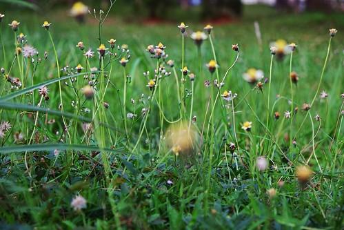 flowers flower bokeh granddepokcity digitalinvelvia
