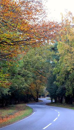 The road to Brokenhurst