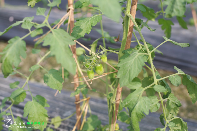 綠翠微農場 (24)