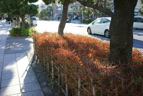 道路脇の紅葉 by leicadaisuki