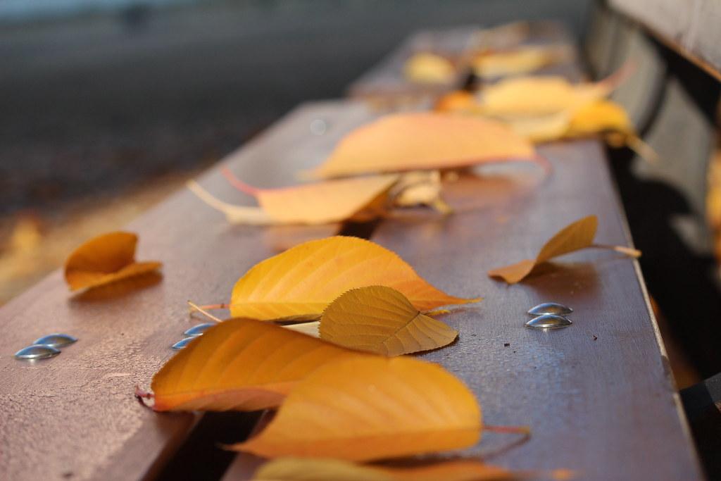 hojas parque