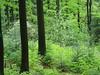 Auf dem Weg zum Bergmischwald im Erzgebirge