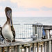 the pelican and the seagull by Abby Leigh photos