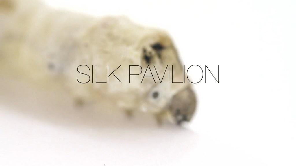 Silk Pavillion by MIT's Mediated Matter group. Image: MIT