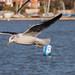 Edg_Res_Birds-19.jpg