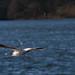 Edg_Res_Birds-2.jpg