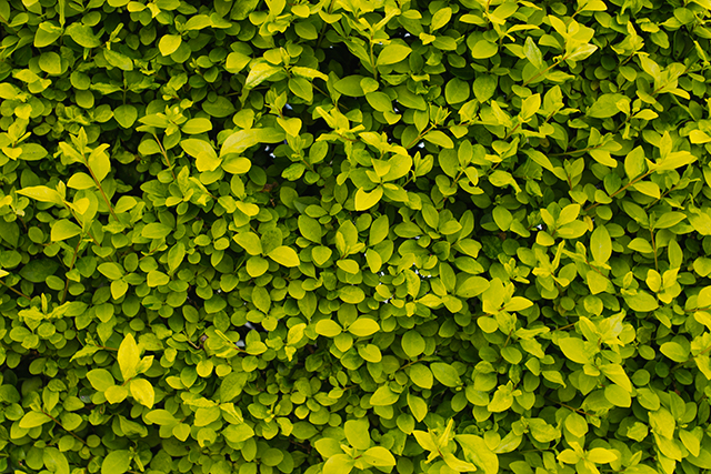 green bush leaves