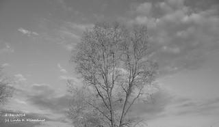 100_9124 - Spring 2014 - 4-26-2014 - B & W Photo
