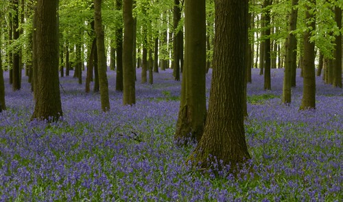 Dockey Wood 29.4.14