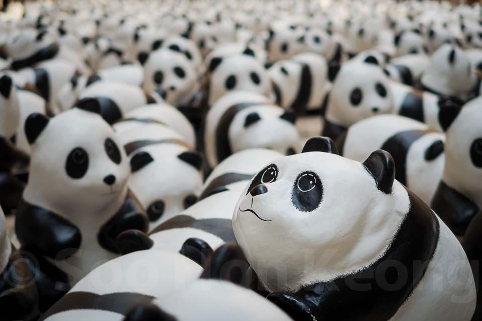 1600 paper mache pandas @ Kuala Lumpur, Malaysia
