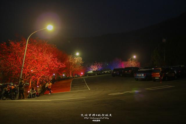 九族賞櫻季-九族文化村-賞夜櫻
