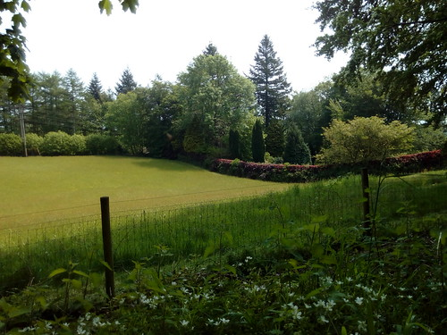 English meadowland